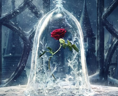 Red Rose in Beauty and the Beast