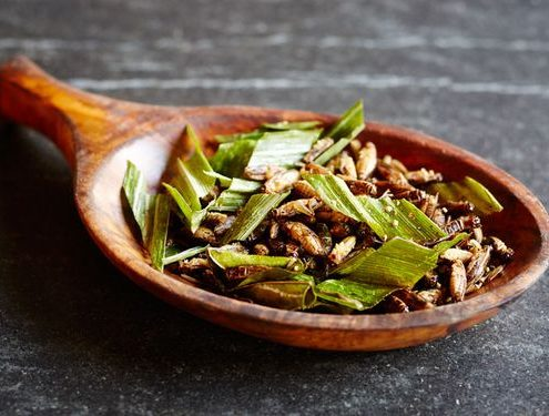 Crickets_Salad_2